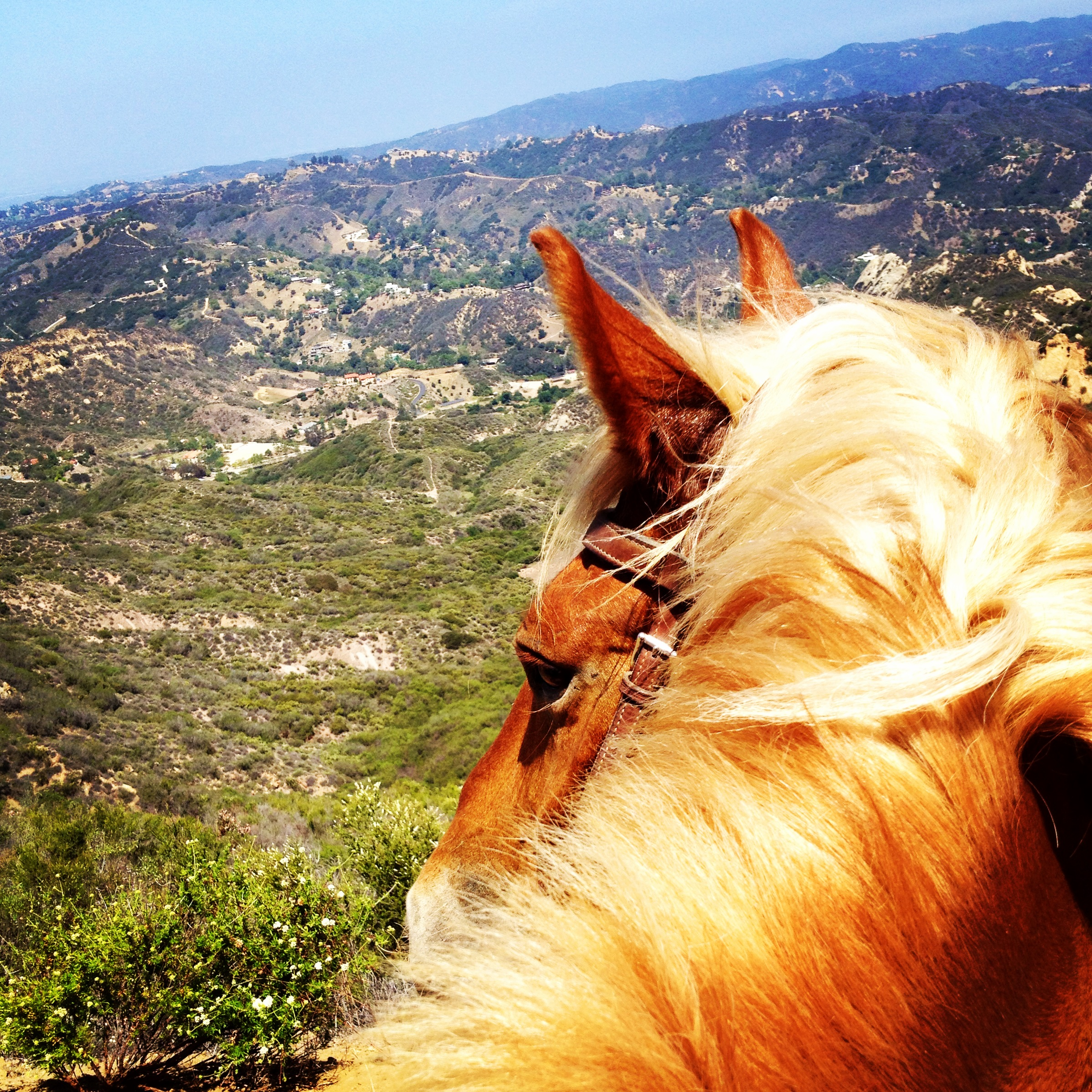 Horse View
